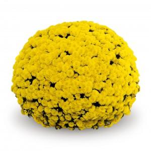 09 geel